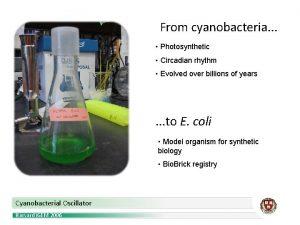 From cyanobacteria Photosynthetic Circadian rhythm Evolved over billions