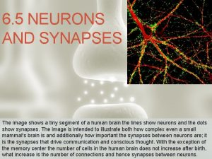 6 5 NEURONS AND SYNAPSES The image shows