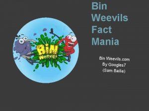 Bin Weevils Fact Mania Bin Weevils com By