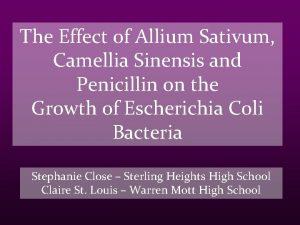 The Effect of Allium Sativum Camellia Sinensis and