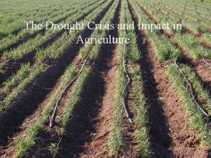 The Drought Crisis and Impact in Agriculture 1992