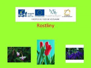 Rostliny Rostliny dlme podle zpsobu jejich rozmnoovn 1