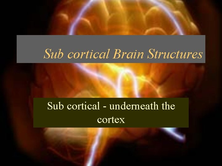 Sub cortical Brain Structures Sub cortical underneath the
