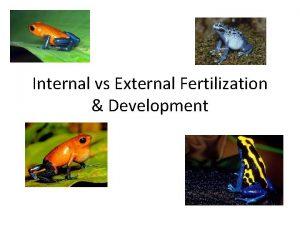 Internal vs External Fertilization Development Fertilization Fertilization is