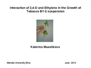 Interaction of 2 4 D and Ethylene in