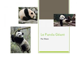 Le Panda Gant Par Eliane Le panda gant