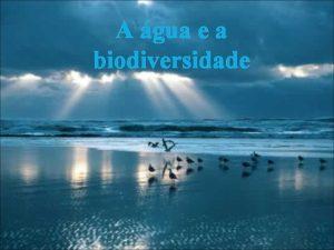 A gua e a biodiversidade gua vida GUA