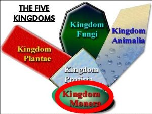 THE FIVE KINGDOMS 1 BACTERIA Bacteria small one