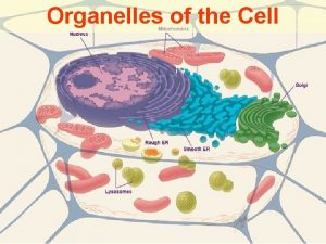 Organelles of the Cell Three Sections of the