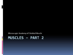 Microscopic Anatomy of Skeletal Muscle MUSCLES PART 2