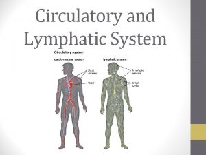 Circulatory and Lymphatic System Contributions of the Circulatory
