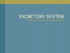 EXCRETORY SYSTEM WHAT IS THE EXCRETORY SYSTEM n