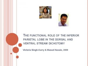THE FUNCTIONAL ROLE OF THE INFERIOR PARIETAL LOBE