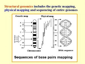 Structural genomics includes the genetic mapping physical mapping