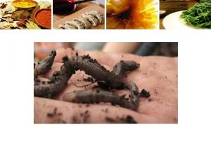 The Urban Agrarian Practice Agriculture Touch Dirt Dont