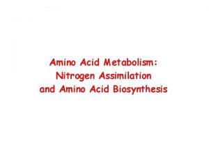 Amino Acid Metabolism Nitrogen Assimilation and Amino Acid