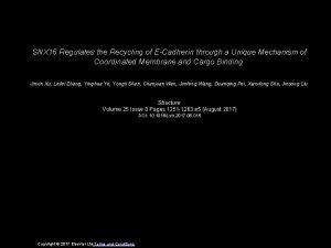 SNX 16 Regulates the Recycling of ECadherin through