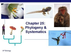 Chapter 25 Phylogeny Systematics AP Biology Investigating the
