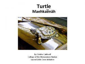 Turtle Maehka enh By Deidre Caldwell College of