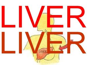 LIVER The primary functions of the liver are