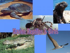 Marine Reptiles Sea turtles sea snakes marine lizards