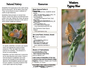 Natural History Butterflies first appeared on the earth
