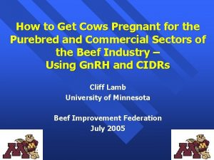 How to Get Cows Pregnant for the Purebred
