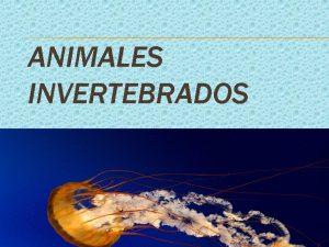 ANIMALES INVERTEBRADOS OBSERVA LAS IMGENES CELENTERADOS En este