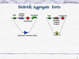 Bio Sketch Harvard i GEM 2005 Bio Brick