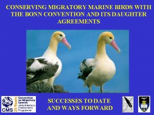 CONSERVING MIGRATORY MARINE BIRDS WITH THE BONN CONVENTION