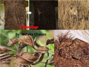 Camouflage By Natalia Chacon The three major categories