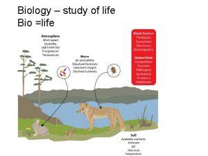 Biology study of life Bio life Make observations