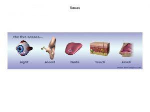 Senses Sensory modalities in human Sensory processing Levels