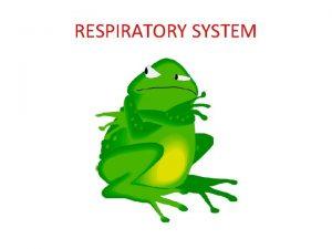 RESPIRATORY SYSTEM Cutaneous Respiration skin Cutaneous Respiration skin