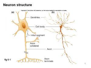 Neuron structure fig 6 1 1 Myelin sheath