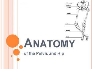 ANATOMY of the Pelvis and Hip BONY ANATOMY