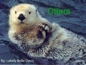 Otters By Lakely Belle Davis Why I chose