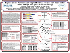Expression and Purification of Integral Membrane Proteins from