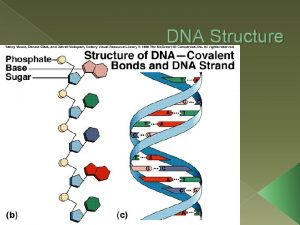 DNA Structure DNA WHAT IS IT DNA stands