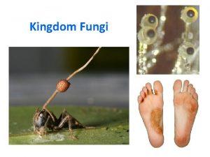 Kingdom Fungi Fungi A Autotroph B Heterotroph Fungi