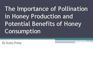 The Importance of Pollination in Honey Production and