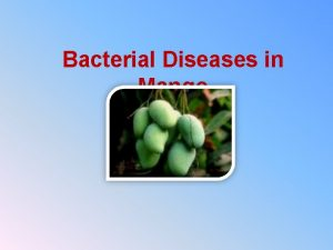 Bacterial Diseases in Mango There are two bacterial