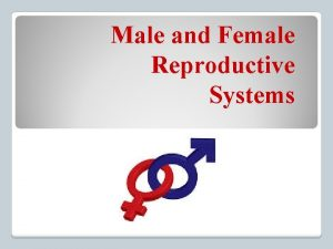 Male and Female Reproductive Systems Male Reproduction System