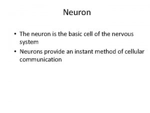 Neuron The neuron is the basic cell of