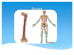 Bones SKELETAL SYSTEM Include all bones 206 in