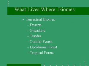 What Lives Where Biomes Terrestrial Biomes Deserts Grassland