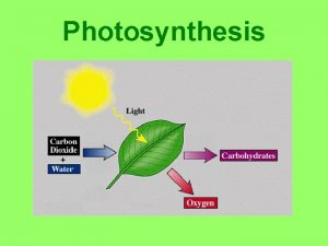 Photosynthesis Light Absorption Sun gives off visible light