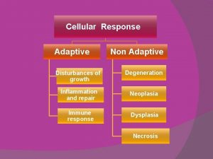Cellular Response Adaptive Non Adaptive Disturbances of growth