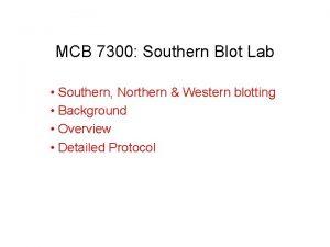 MCB 7300 Southern Blot Lab Southern Northern Western