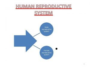 HUMAN REPRODUCTIVE SYSTEM Male reproductive system Female reproductive